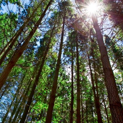 Going Paperless does not save Trees